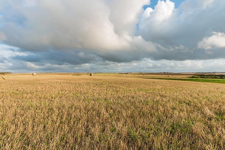 Сельское хозяйство Дании